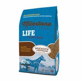 MUENSTER HORSE / LIFE 40#